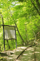 山梨県 西沢渓谷 新緑の旧森林軌道と案内板