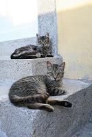 ポルトガル ポルト歴史地区の猫