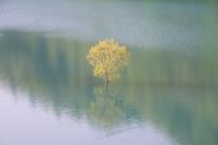 秋田県 湖に浮く新緑