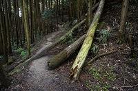 大阪府 登山道の倒木