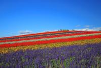 北海道美瑛町展望花畑四季彩の丘