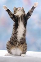 両手を広げた猫