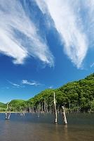 北海道 落合ダムと枯木