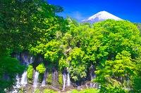 静岡県 白糸の滝と富士山
