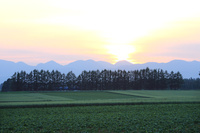 北海道 上士幌町イモ畑の風景