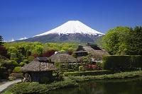 山梨県 新緑の忍野より富士山
