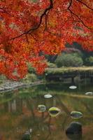東京 小石川後楽園の紅葉