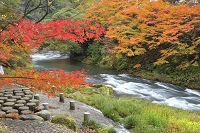 石川県 紅葉の鶴仙渓
