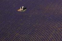 フランス ヴァロンソル ラベンダー畑