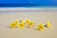 ハワイ プルメリアとビーチ