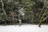 京都府 雪の大徳寺高桐院庭園