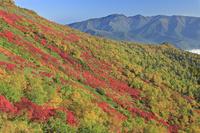 北海道 銀泉台の紅葉とニセイカウシュペ山