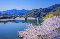 山口県 桜咲く錦川と錦帯橋