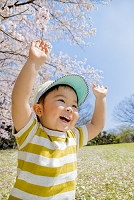 桜の咲く公園で両手を上げる日本人の男の子
