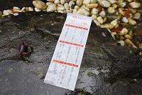 京都府 出雲大神宮 真名井の水で浮き出た開運水みくじ