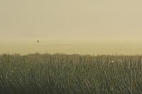 千葉県 長ネギ畑とトンボ