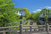 滋賀県 新緑の明治橋と八幡掘り船めぐり