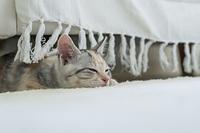 ソファの下でまどろむ仔猫