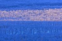 北海道 釧路湿原