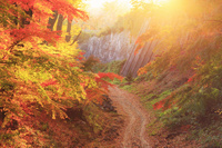 長野県 小諸市 小諸城址懐古園 紅葉の樹林と道路と夕日の木漏れ日