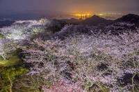 長崎県 桜咲く大山展望所夜景