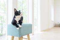 椅子の上で見上げる猫