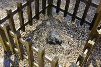 奈良県 春日大社南門前の神石