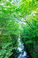 東京都 新緑の玉川上水