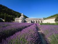 フランス・プロヴァンス ラベンダー畑とセナンク大修道院