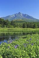 北海道 南浜湿原のカキツバタと利尻富士