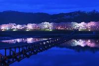 島根県 斐伊川堤防桜並木 夜景