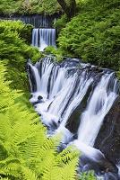 長野県 白糸の滝