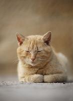 ドイツ 路上に横たわる猫