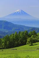 山梨県 八ヶ岳牧場から望む残雪の富士山と山並み