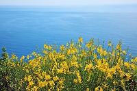イタリア チンクエ・テッレから望む地中海