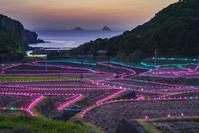 長崎県 春日の棚田記念のライトアップ