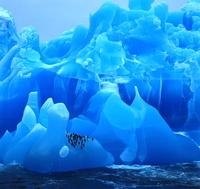 南極大陸 ヒゲペンギン