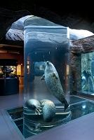 北海道 旭山動物園 アザラシ館