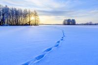 北海道 摩周原野 狐の足跡