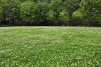 コイノボリ舞う公園
