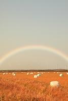 北海道 牧草ロールと風車群