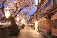 石川県 夜の主計町茶屋街と桜