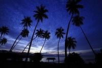 ニューカレドニア 南の島 夕暮れ時の椰子の木