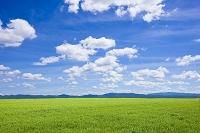 草原と青空