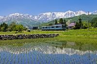長野県 電車と白馬連峰