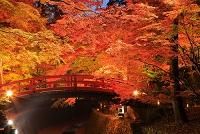 京都府 紅葉の北野天満宮