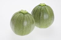 マルズッキーニ 薄緑
