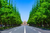 新緑の神宮外苑いちょう並木