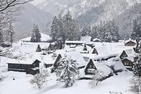富山県 雪の相倉合掌造り集落