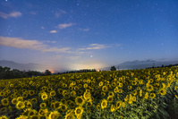 山梨県 ヒマワリ畑と八ヶ岳と星空